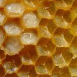 Kebaikan Susu Lebah – Royal Jelly